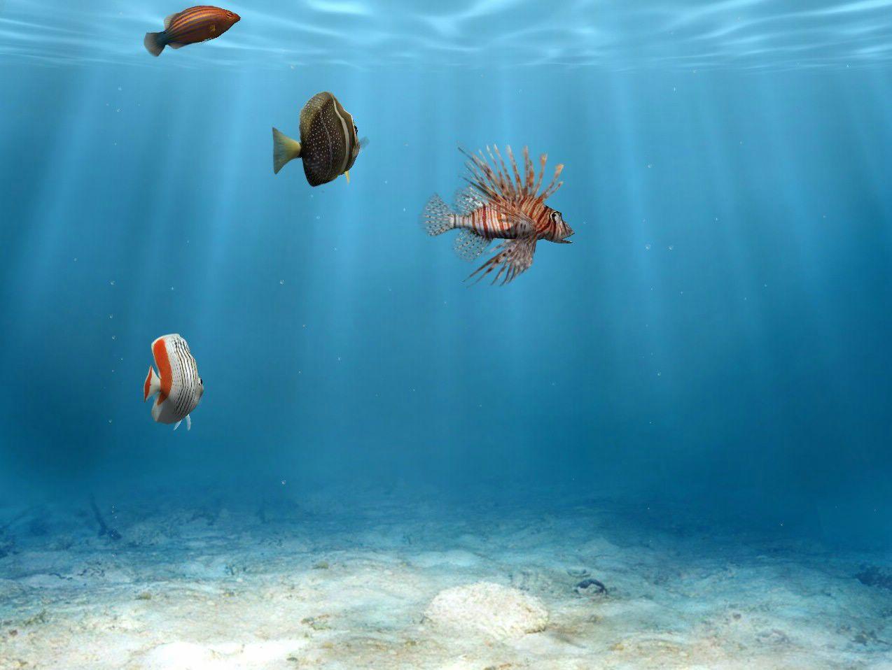 poissons fond d'écran gratuit